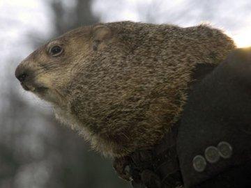 Punxsutawney Phil verwacht nog een lange koude winter