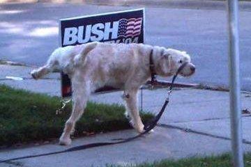 Populariteit George Bush naar dieptepunt