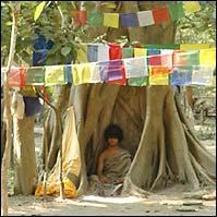 Boeddha jongen