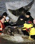 walvis in de Theems