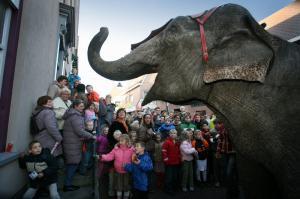 Olifant tijdens parade in Huissen