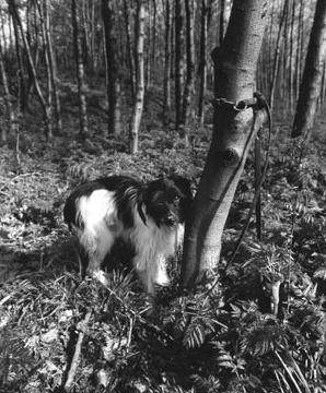 Hondje aan boom