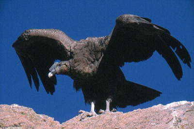 Vogelopvang culemborg